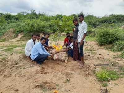 Monkey that became student of a school in Andhra village, died in stray dogs attack