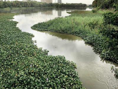 What bogs down BBMP's lake rejuvenation plans?