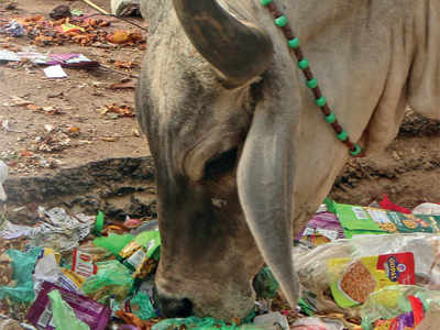 Does Gujarat really care about its cows?