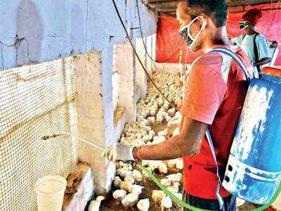 Avian influenza: More states step up vigil to curb spread of bird flu