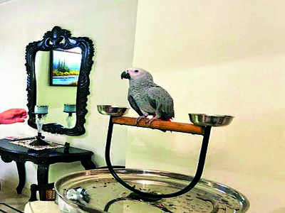 The Towns Mirror Special: Around Town: Born to fly