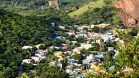 Chennai: 'Alien' species threaten native flora of Tirusulam Hills, if left unchecked can alter its ecosystem