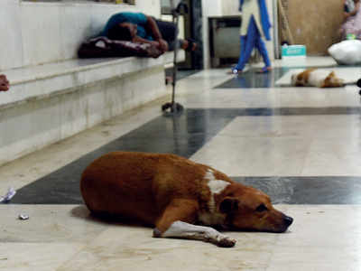 Stray menace in hosps to be brought to heel with adoption plan
