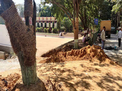 Last few trees shifted out of Metro's way