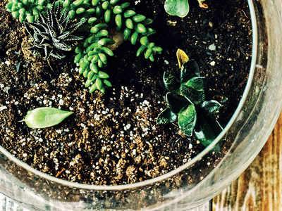 PLAN AHEAD: Make a terrarium