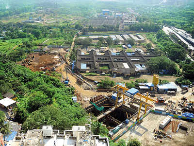 Construction can go on but stay on felling continues, says SC