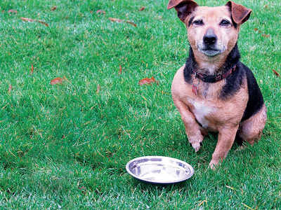 The truth about pet food