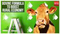 Moo Moo paint: Bovine formula to boost rural economy