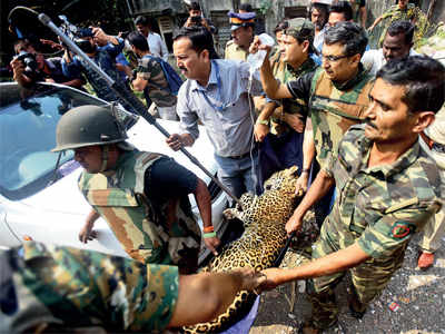Leopard attacks five; trapped in 4-hour rescue op