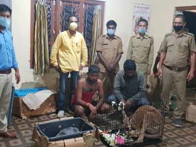 Assam: Illegal consignment of exotic wild animals and birds nabbed at Lailapur