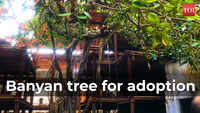 150-yr-old banyan tree in Delhi up for adoption