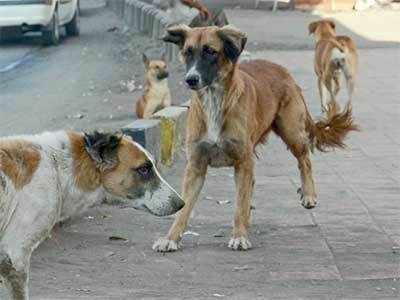 Dog menace on the rise
