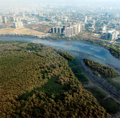 Draft DP offers mangrove land on a platter to city's builders