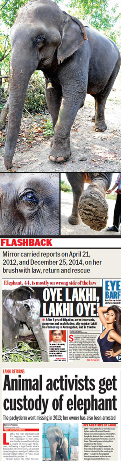 Saving Lakhi is a mammoth task for her caregivers