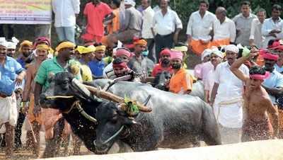 Mangaluru: PETA, Kambala organisers lock horns