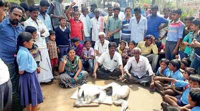 Karnataka: The curious case of Mandya's pelican deaths