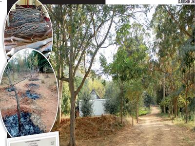 Tree 420: Nature school that chops trees
