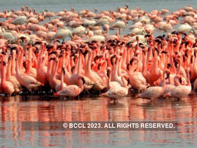 Supreme Court expresses concern over extinction of flamingos in Mumbai