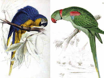 Edward Lear and the fine art of bird painting