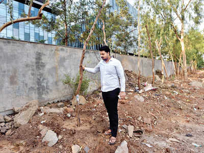 BJP corporator says Panchshil Realty replanted trees improperly, approaches Pune Municipal Corporation, demanding action