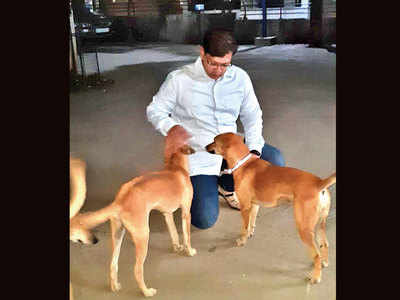 Animal lover thrashed by society residents for feeding friendly strays; 3 men booked