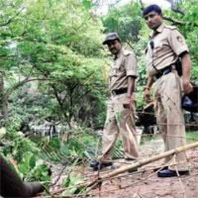 Last big sandalwood tree from Cubbon Park axed and stolen