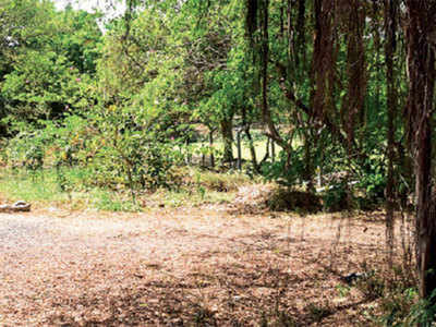 Mahim Nature Park dropped from Dharavi's redevelopment plan