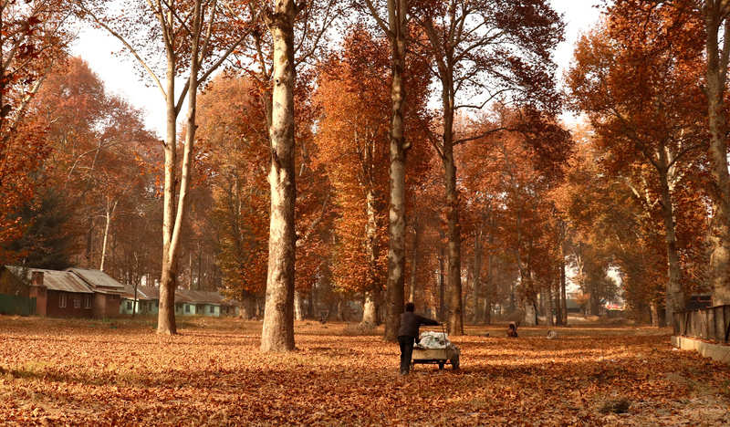 In Photos: Kashmir welcomes autumn and the pictures will take your breath away