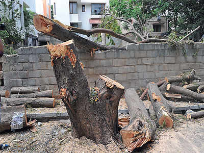 BBMP Budget 2019: Cut down the trees, get air purifiers instead