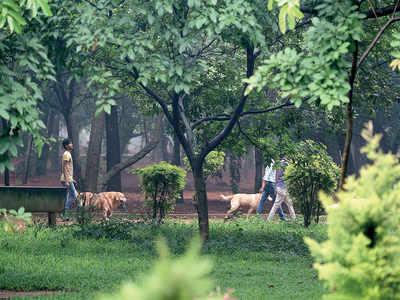 Cubbon Park lovers frown at smart plans