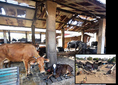 Cattle owners and KCB lock horns over boundary wall