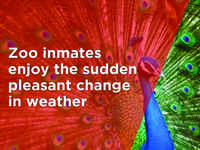 Zoo inmates enjoy the sudden pleasant change in weather