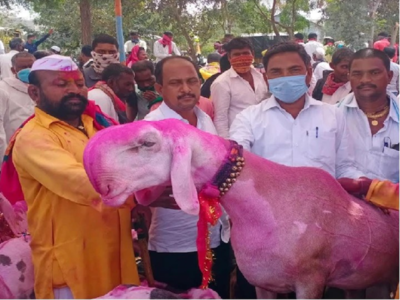 Goat named 'Modi' gets an offer of Rs 70 lakh, but the seller wants Rs 1.5 crore