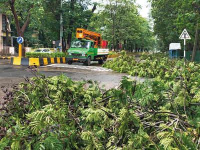 Airoli man dies after tree falls on him