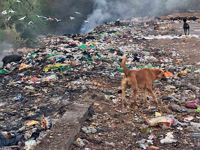 Citizens' movement transforms Kharadi from dump to dream