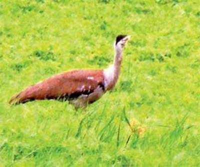 Forest dept's notice to power firm after one more bird electrocuted