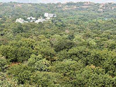 Guj forest cover increases by 100 sq km
