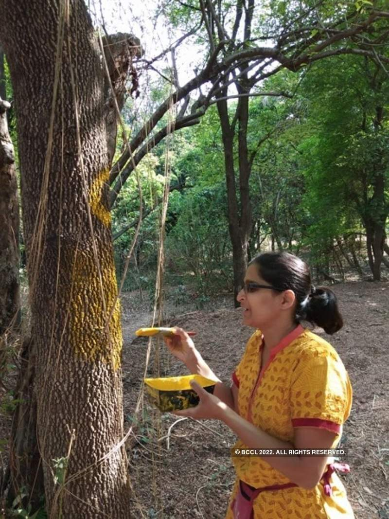 Punekars paint trees in order to save them