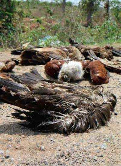 Kites die in droves in Tumakuru