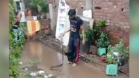 On cam: Man catches a snake, brutally thrashes it on the ground at Ulhasnagar