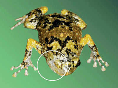 Scientists appeal to citizens to report deformed frogs