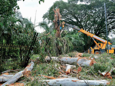 BBMP makes tree count public, 5% of work is done