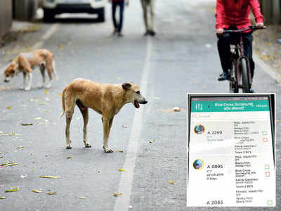 PMC testing app to track stray dogs