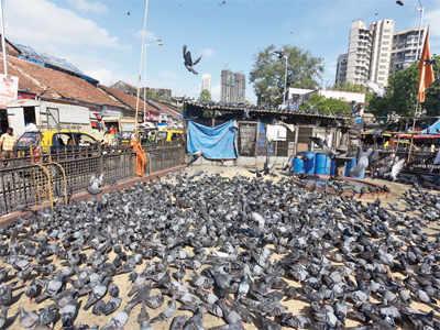 Pigeons a nuisance, shut Dadar kabutarkhana: MNS