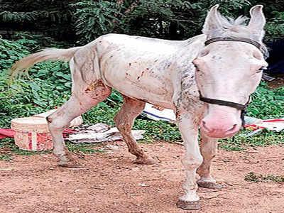 Horses bear the brunt of pandemic