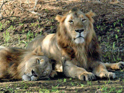 'Gir National Park in need of better air connectivity'