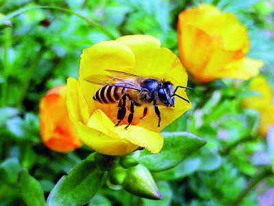 Urban Jungle: Bee-town dance