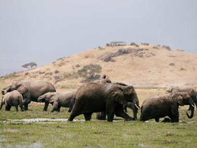 Nearly 100 elephants killed for ivory in Botswana