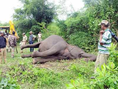West Bengal: Three elephants electrocuted in Jhargram