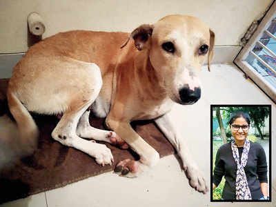 2 incidents of animal abuse, brutality in city